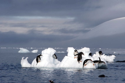 Adrift Across the North Pole